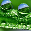 burbulas1