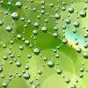 burbulas2